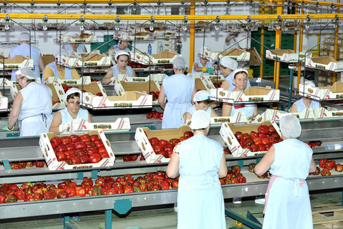 AGROLUTION Packing House Fresh Food Value Addition